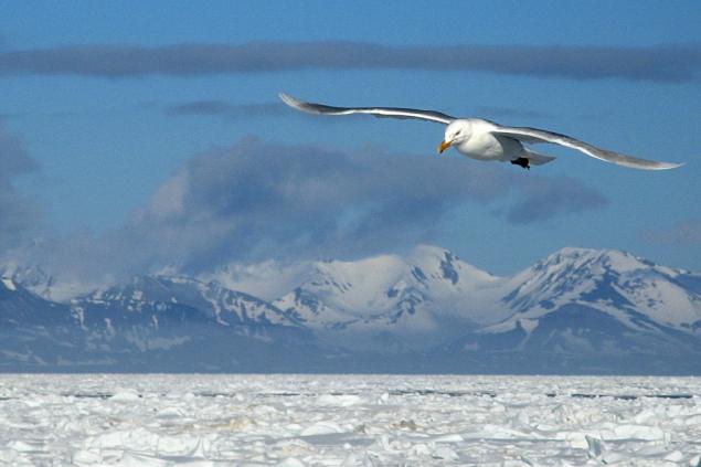 Południowo-zachodnie wybrzeża Spitsbergenu. Fot. Jakub Małecki