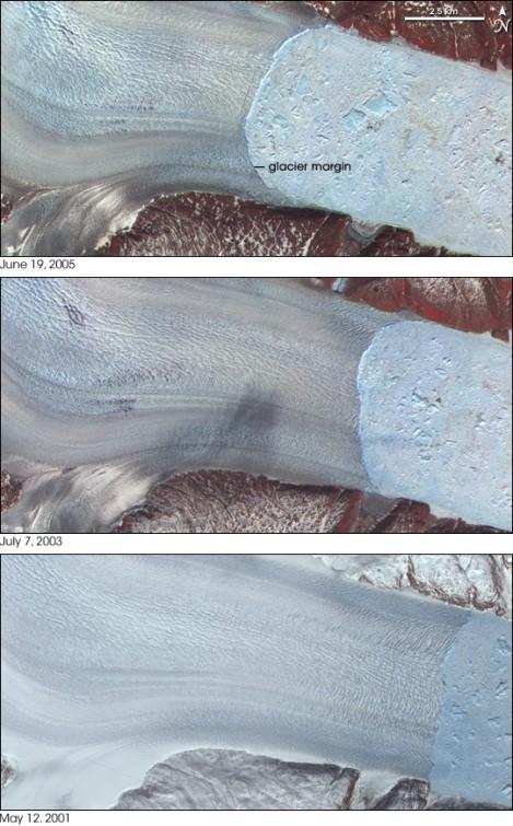 Recesja lodowca Helheim na skutek intensyfikacji cielenia. Fot. NASA/Wikimedia