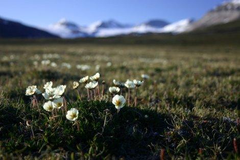 Arktyczna tundra. Fot. J, Małecki