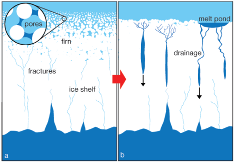 Mechanizm inicjujący osłabianie lodowców szelfowych: a - lodowiec szelfowy pokryty jest porowatą pokrywą śnieżną, która magazynuje ewentualną wodę roztopową; b - brak pokrywy śnieżnej powoduje przenikanie wody do szczelin i ich przegłębianie. Za: Kuipers Munneke i in. 2014.