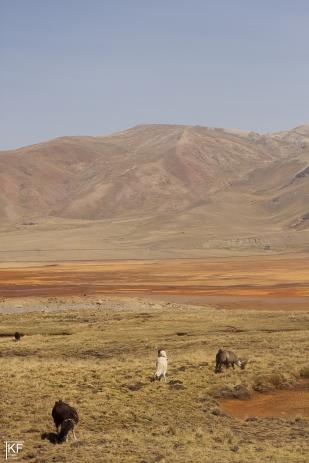 W drodze w Andy (Huayna Potosi). Fot. T. Kurczaba