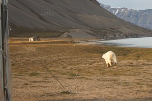 Ucieczka spod wrót Stacji Polarnej UAM